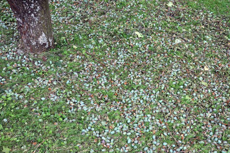 Une averse de gr le a tout saccag dans un coin du gros de for Le jardin morat
