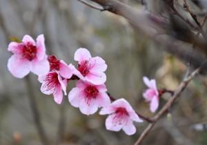 Quelques péchés mignons, fleuris, rien que pour vous: dans FRANCE l'Uzège DSC_0019-300x210