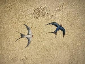 oiseaux de nuit (3)